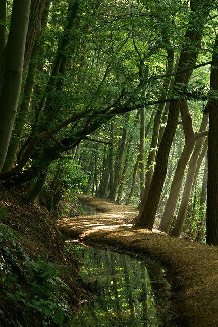 Forest Paths by ajn elemans