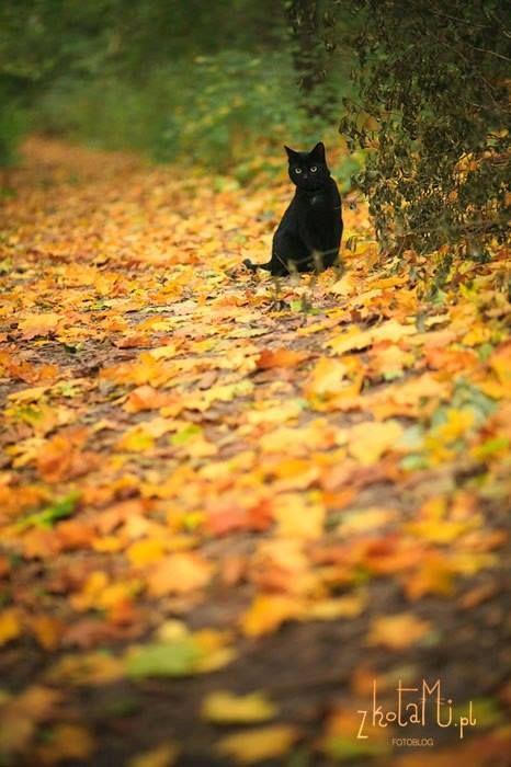cat lynx autumn foliage - photo #29