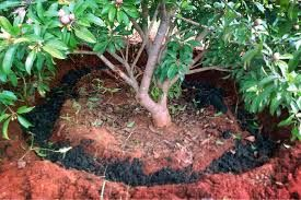 Image result for terra preta soil