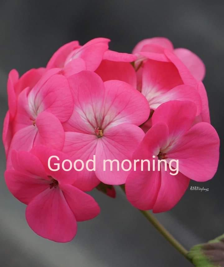 Pin By Fufu On ว นอ งคาร In 2020 Good Morning Flowers Good Morning Images Morning Images