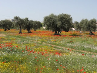 Spring in Salento? Contact me!