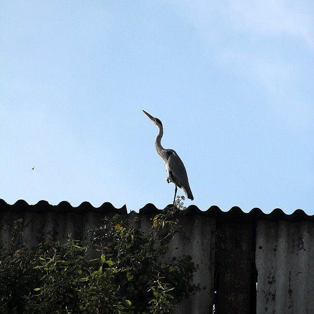 Tenho novos vizinhos 💚 #garçareal #garça #real #pássaro #ave #natureza #bird #instabird #nature