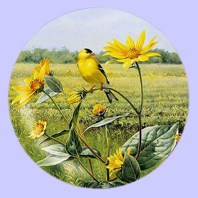 Summer Gold Goldfinch - Artist: Marc Hanson