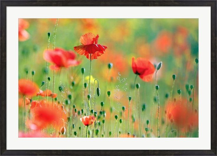 United Colors of Summer by Roeselien Raimond Framed Art Print Wall Picture, Espresso Brown Frame, 43 x 31 inches