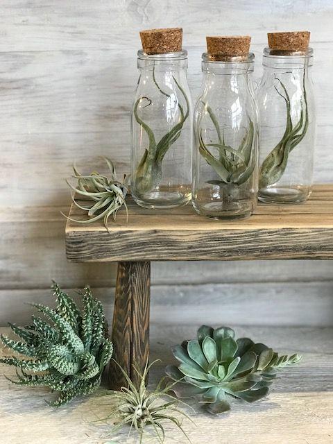 Pienet ilmakasvit mahtuvat vaikka pulloon
