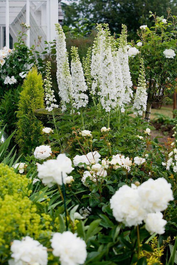399 best Beautiful White Gardens images on Pinterest | White gardens ...