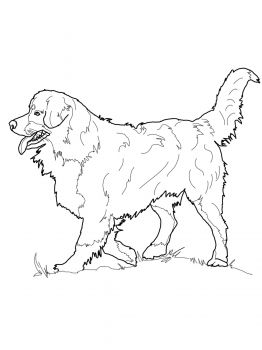 Bernese Mountain Dog Coloring Page From Dogs Category Select 27252 Printable Crafts Of Cartoons Nature Animals Bible And Many More