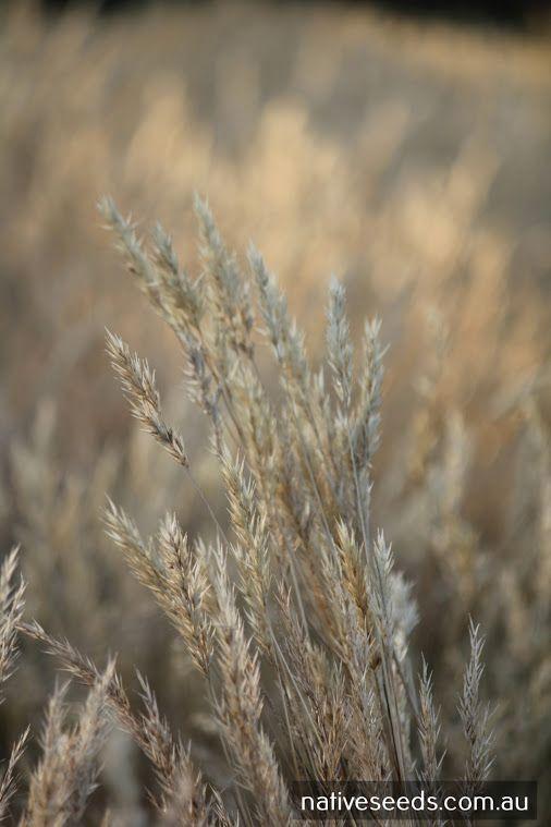 Native Seeds Pty Ltd - Google+
