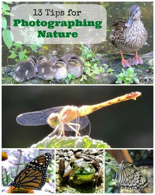 13 Tips for Photographing Nature #NGKInsider | Naturally Educational