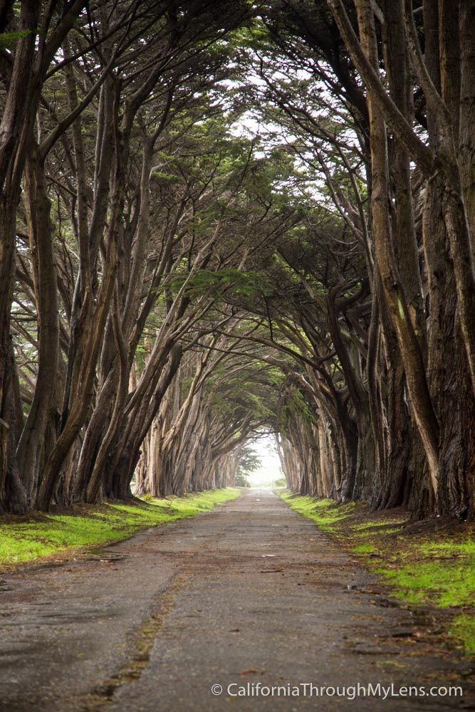 Cypress Tree Tunnel in Point Reyes National Seashore
