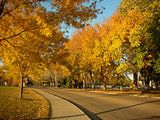 Learn about Colorado State University and What It Takes to Get In: Colorado State University
