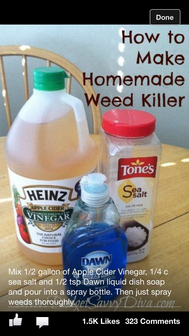 Home made weed killer it changes the soil ph and will for Everything about soil