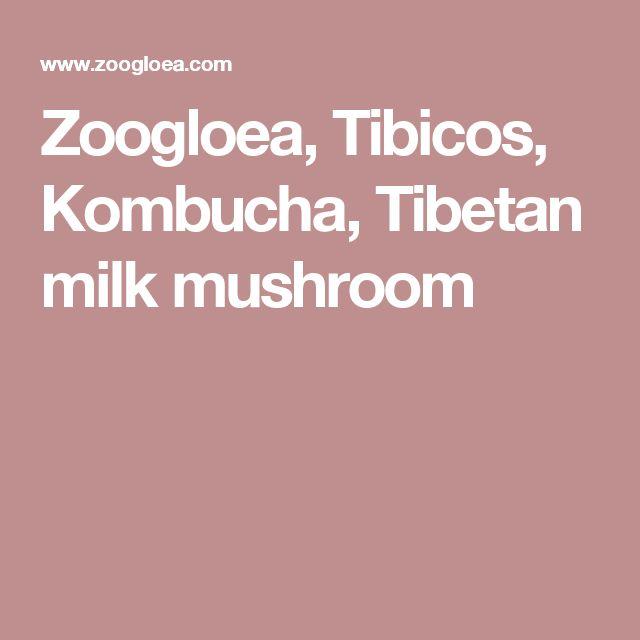 Zoogloea, Tibicos, Kombucha, Tibetan milk mushroom