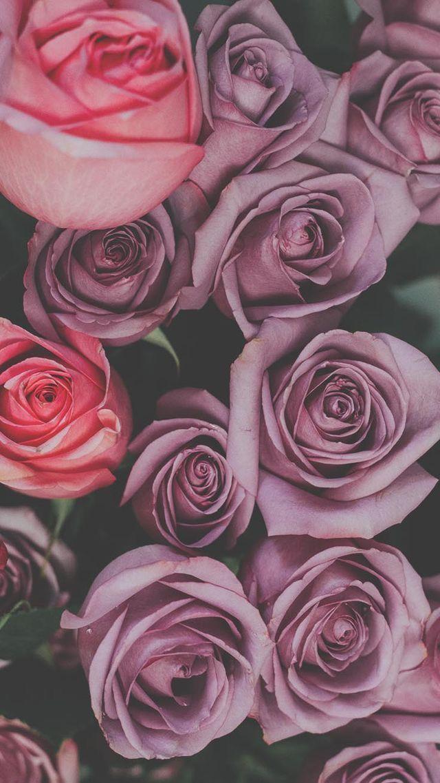 Iphone háttérképek, Rózsa