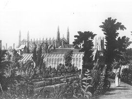 Ackerman's 1815 engraving of the old, city-centre Botanic Garden, established in 1762
