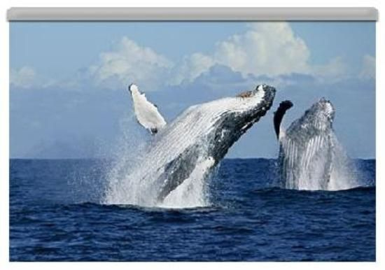 Whale watching at Brier Island  Went many years ago and loved it. :)