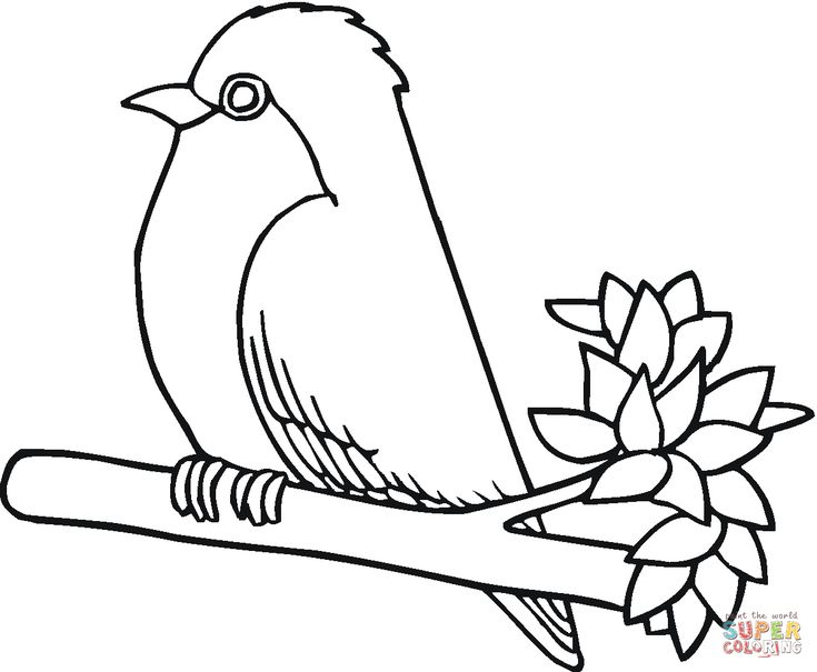 Line Drawing Robin : Best images about line drawings on pinterest coloring