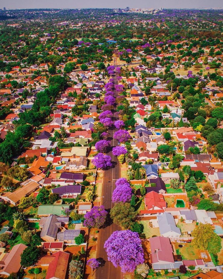 The reverse of this photo has been featured on over 100 IG accounts and is @southafrica's most liked photo of 2016. But my friends still hate it😂 All the purple you see in the far distance is still more Jacaranda trees all the way to Sandton. This is Joburg best season! Joburg Jacarandas😍