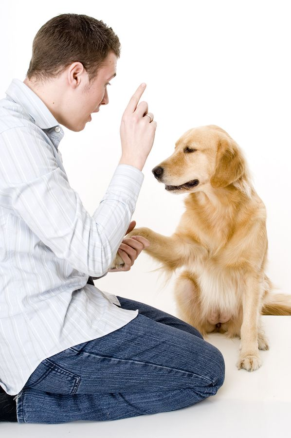 essay about dog training