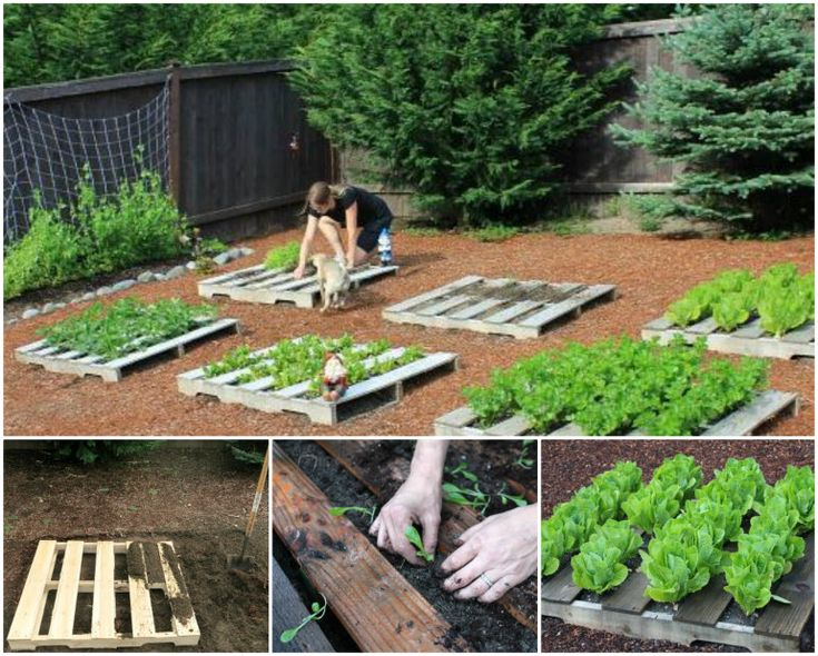 Pallet Garden Planters - love how the pallets are on the ground, so much better than on a wall - if you have the space that is :)