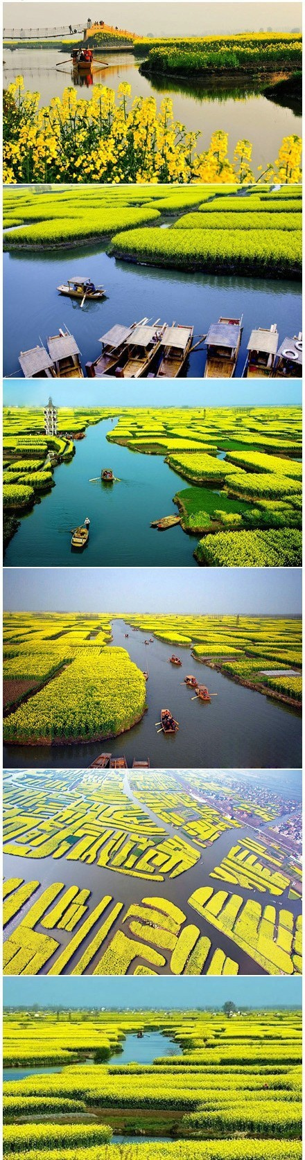 (*^__^*)  Just come see Canola Flowers in Xinghua, Jiangsu Province of China