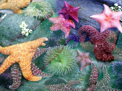 a Tide Pool Gathering of Sea Stars, Anemones and Coral