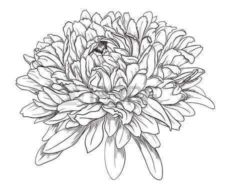 хризантемы тату - Поиск в Google