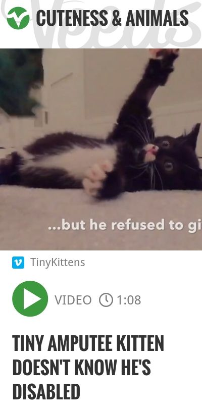 Tiny amputee kitten doesn't know he's disabled | #miraclekitten | http://veeds.com/i/2c7X0wBnH-tz5y1s/cuteness/