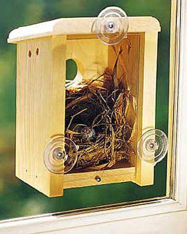 Window Nest Box: Birdhouses, Kitchens Windows, Windows Nests, Birds Feeders, Birds Nests, Nests Boxes, Birds House, Cool Ideas, Bird Houses
