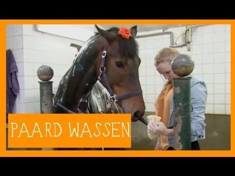 Paard wassen | PaardenpraatTV - YouTube