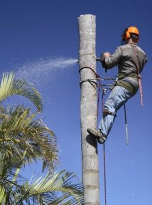 Great Tree Trimming Services