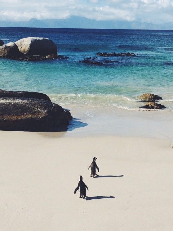 one of my top destinations I want to go this year: Cape Town, South Africa
