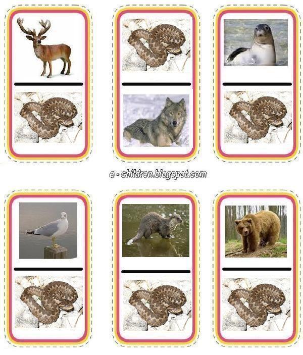 állatok 8