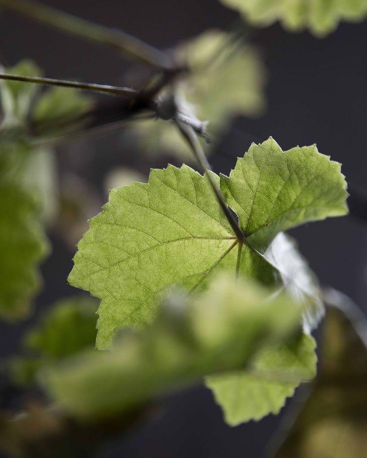 Those spring green notes ...  #green #plante #grønt #inspiration