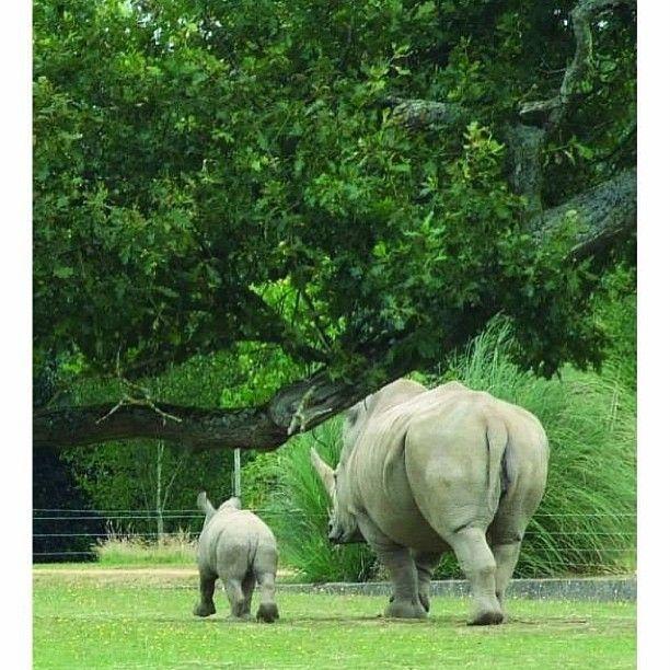 rhino and baby! so cute!