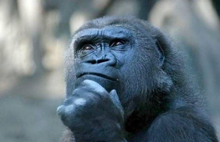 Hayvanlar Hakkında Eş-Dost Ortamında Bahsedip Hava Atabileceğiniz Az Bilinen İlginç Gerçekler http://goster.co/hayvanlar-hakkinda-es-dost-ortaminda-bahsedip-hava-atabileceginiz-az-bilinen-ilginc-gercekler