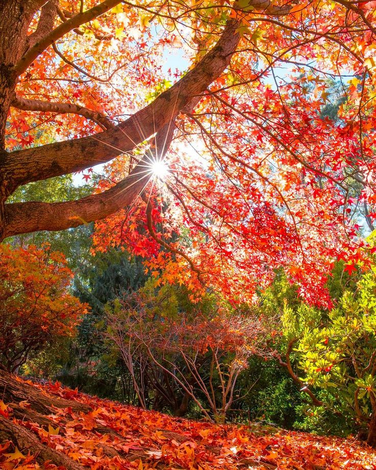 Mount Lofty Botanic Garden. South Australia.