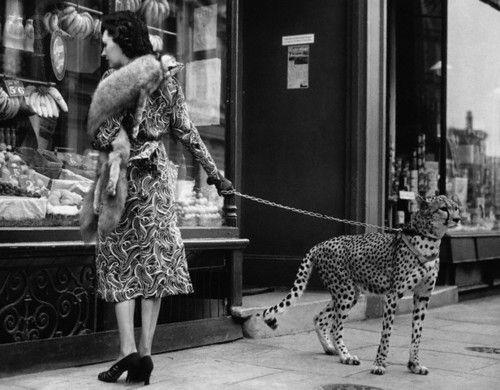Phyllis Gordon walks her pet cheetah in London, 1939