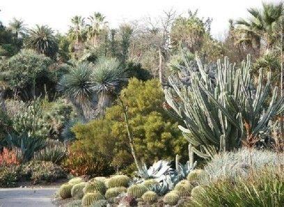 Más de 30 por ciento de cactus en el mundo, en peligro de extinción   Ciencias…