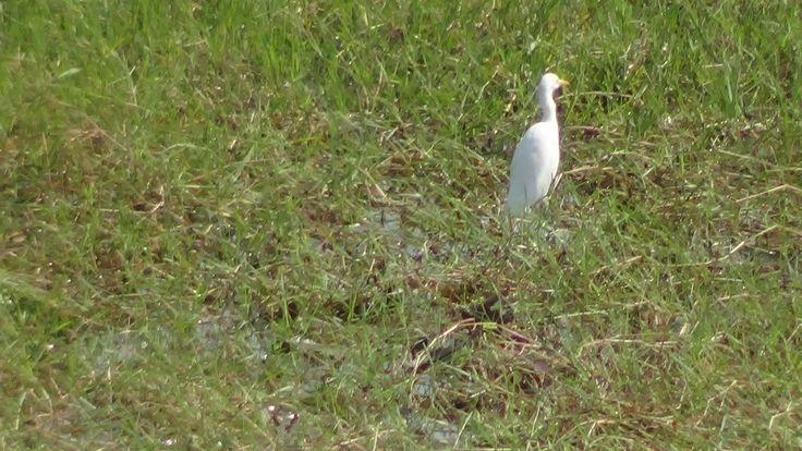 lonely crane