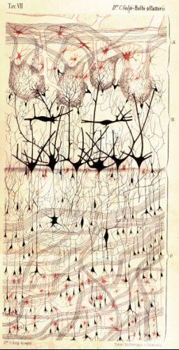 Visualizing the brain