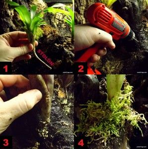 Josh's Frogs How-To Guides » Blog Archive » How to Plant Epiphytes in a Vivarium