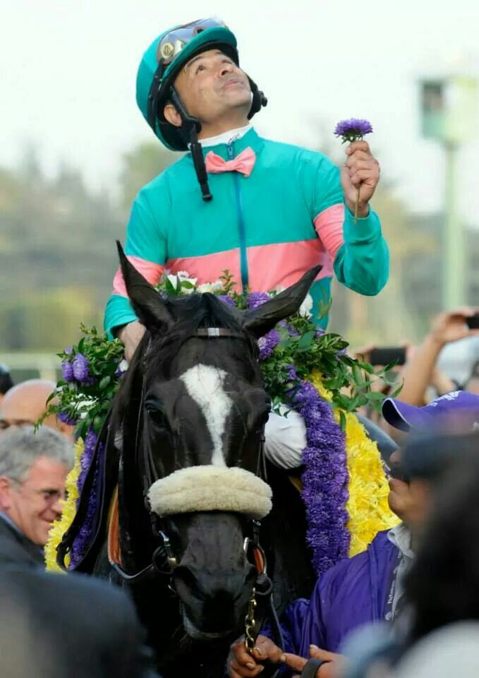 17 Best Images About Breeder S Cup Champions On Pinterest
