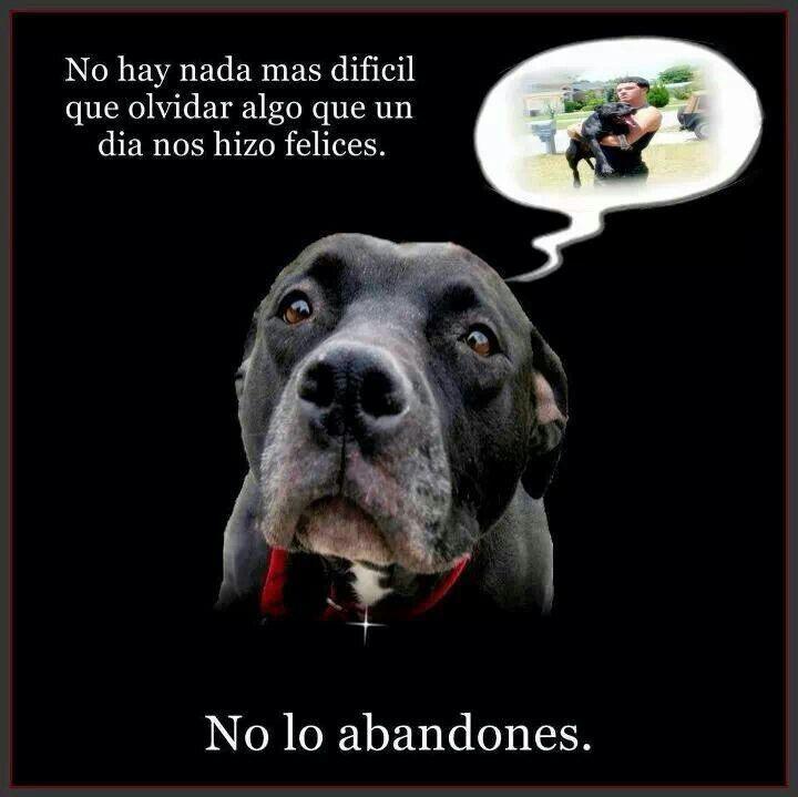 #adopta #noalmaltratoanimal
