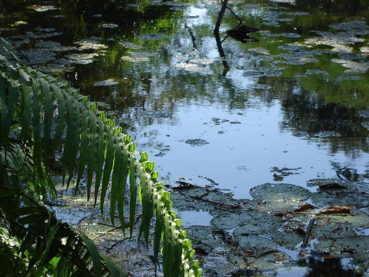 quinta san pedro claver #agua #rio #oceano #lake #nature #laguna #photo #photography #photographer #naturelover #foto #vida #reflejo #charco #ocean #lago #gotas #paisaje #picoftheday