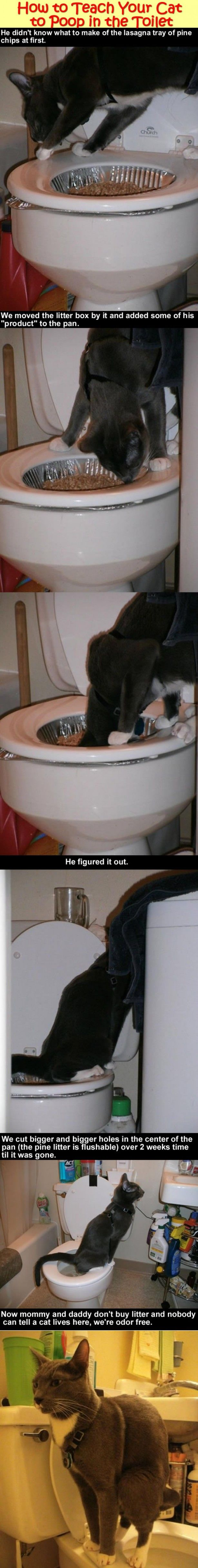 Hoe kunt u uw kat te leren poepen in het toilet.