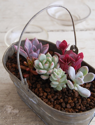 Many different succulent containers.