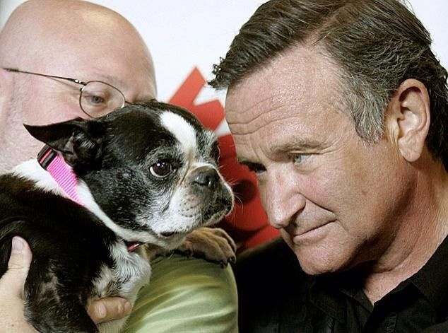 Two of my favorites- robin Williams and a boston terrier. Rest in peace dear soul.