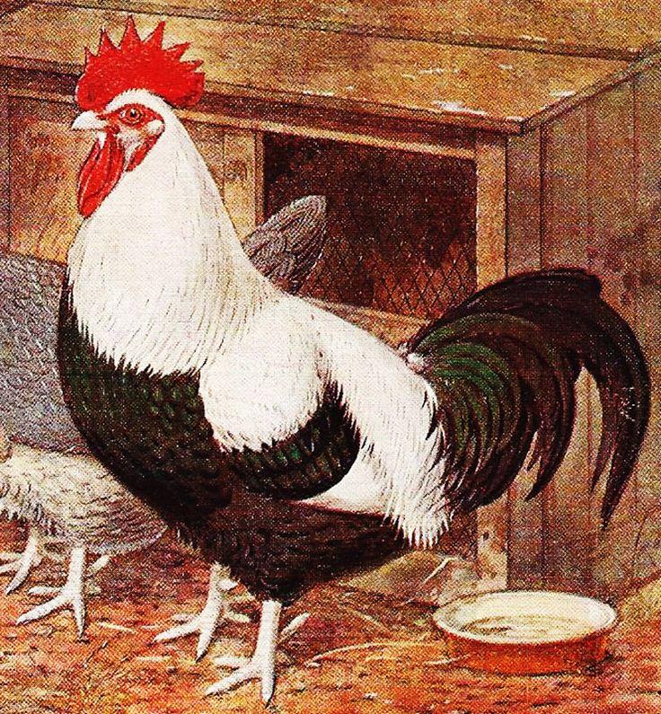Les 25 meilleures images de la cat gorie d cor de coq sur for Decoration poule pour cuisine