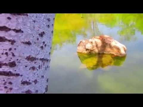 LOS ÁNGELES DE ESTEPONA- Irina Nagy Gyuris Vídeo 2016 mp4